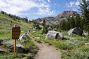 Round Top Mountain. Off Highway 88 near Carson Pass, hike a varied loop through lush wildflower fields from Woods Lake Campground to Winnnemucca Lake then Round Top Lake, in Mokelumne Wilderness, Eldorado National Forest, Sierra Nevada, California, USA. The excellent loop trail is 5.3 miles with 1250 feet gain (or 6.4 miles with 2170 feet gain if adding the scramble up Round Top).