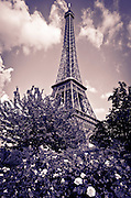 The Eiffel Tower and rose garden, Paris, France