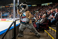 KELOWNA, CANADA - MARCH 10:  Rocky Racoon, the mascot of the Kelowna Rockets dances with the fans against the Kamloops Blazers on March 10, 2018 at Prospera Place in Kelowna, British Columbia, Canada.  (Photo by Marissa Baecker/Shoot the Breeze)  *** Local Caption ***
