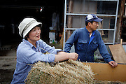 Fukushima city, August 2nd 2011 - Keiko Sanpei and her husband Toshinori Sanpei  in front of their new farm in Motomiya, 50km from Fukushima Daiichi nuclear power plant. They had to evacuate from their farm in Namie, 25km from the NPP. They sold 40 of their cows but succeeded to find a place for 60 of them in Motomiya. They don't know whether they will be able to go back before years or even decades, as the radiation in the area where they used to live is as high as 15microSv/h.