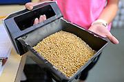 Grain testing