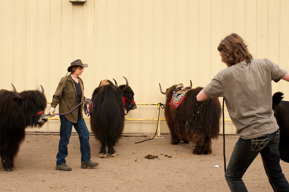Handler Dianne Latona, left, leads Carley into a yak competition during the National Western Stock Show. Carley received the prize of Grand Champion in the female class of the competition.