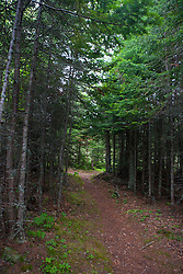 Hiking trail through the boreal forest on Raspberry Island, Isle Royale National Park, Michigan, United States of America