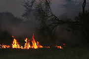 Africa, Tanzania, Serengeti National Park Wild bush fire