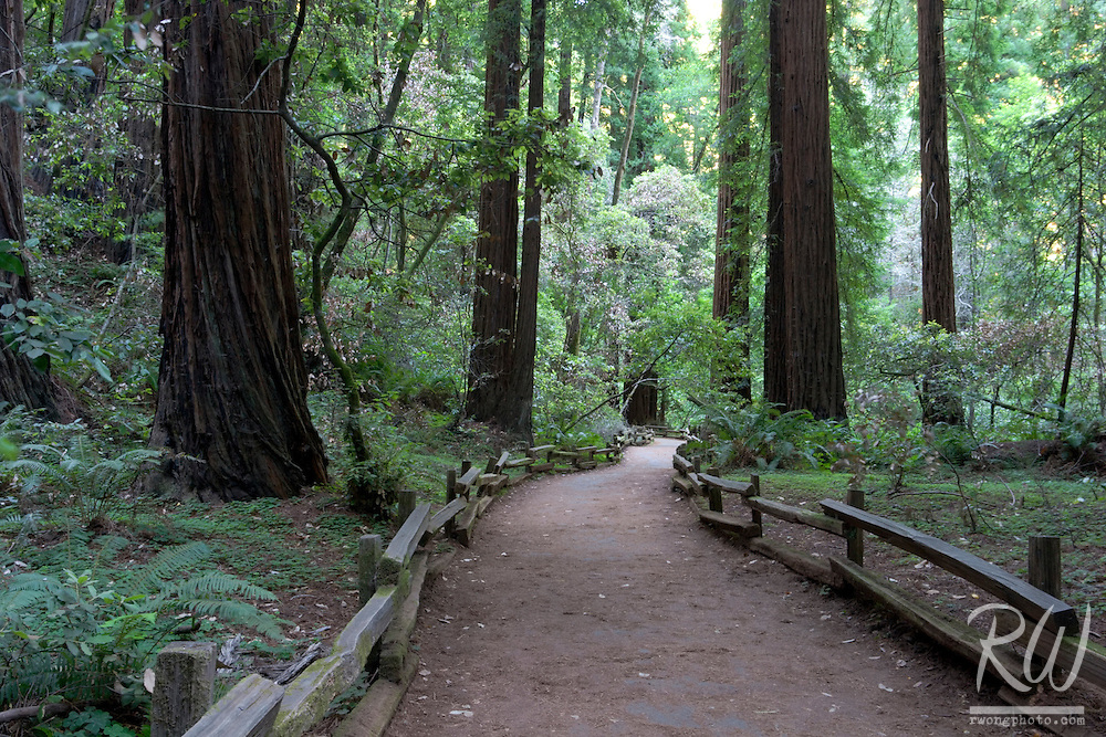Trail Through Coastal Redwood Forest, Muir Woods National Monument, California