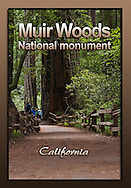 Muir Woods Collection