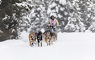 Musher Marvin Kokrine competing in the Fur Rendezvous World Sled Dog Championships at Goose Lake Park in Anchorage in Southcentral Alaska. Winter. Afternoon.