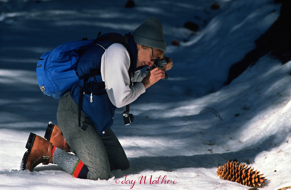 Dorothy Limbach, an Elderhostel member from Los Angeles, on tour in the park stops for a close-up of a Sugar Pine cone during a hike in the Mariposa Grove of giant redwoods.   January 1989