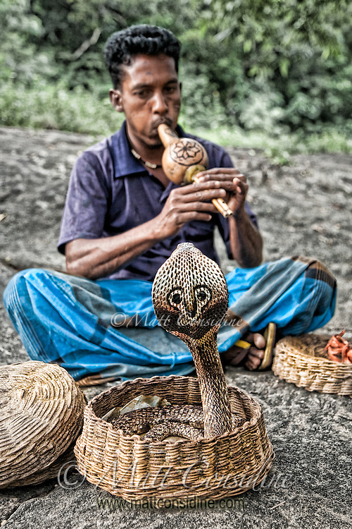 Snake charmer and cobra performing at a temple.<br /> (Photo by Matt Considine - Images of Asia Collection)