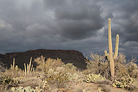 Saguaro National Park west with heavy overcast