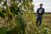 Bean farmer Yan Wenxiang, stands next to his crops in Manhenuan village, Xishuangbanna, China.
