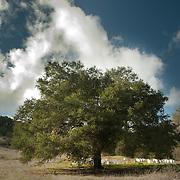Scenic views at Eden Hills, Escondido, CA.