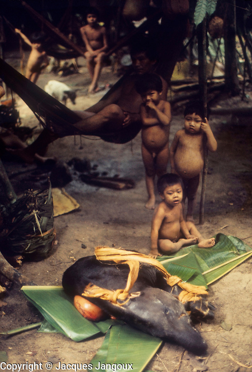 South America, Venezuela, Guyana Highlands. Eñepa (Panare) Indian tribe. Childen observing a tapir brought by hunters.