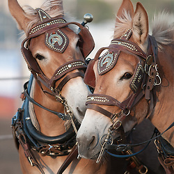 Mule Days 2011 - Best Of