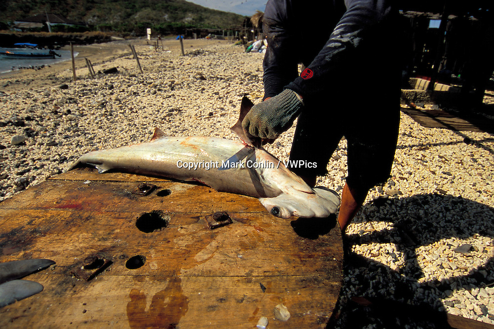 Shark finning camp, Mexico, Pacific Ocean