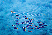 angel fish school at the sea of cortez