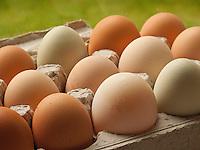 Fresh, locally grown chicken eggs from home garden in cardboard egg carton, Kodiak Island, Southwest, Alaska
