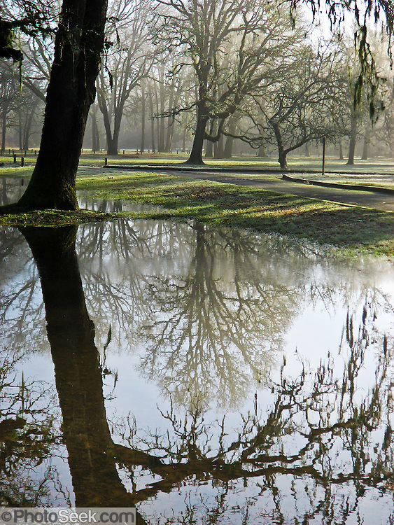 A rainwater pond reflects foggy trees at Champoeg State Heritage Area, Oregon, USA.