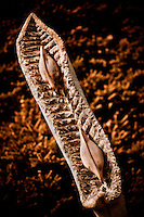 Zimsculpt at Van Dusen Botanical Garden: Dried Seed Pod - springstone & hardwood sculpture by Albert Wachi (original sculpture available at www.zimsculpt.com)