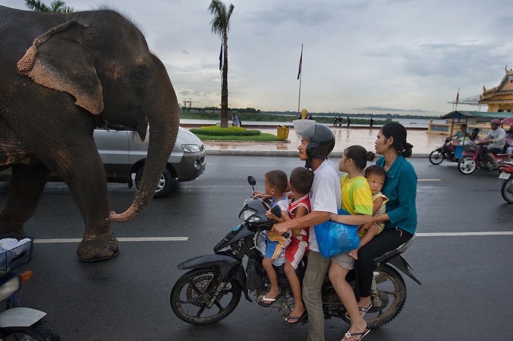 Mass transit, an elephant makes its way down a city street in Phnom Penh as a family crowded on a motorcycle stops to look at the unusual site.