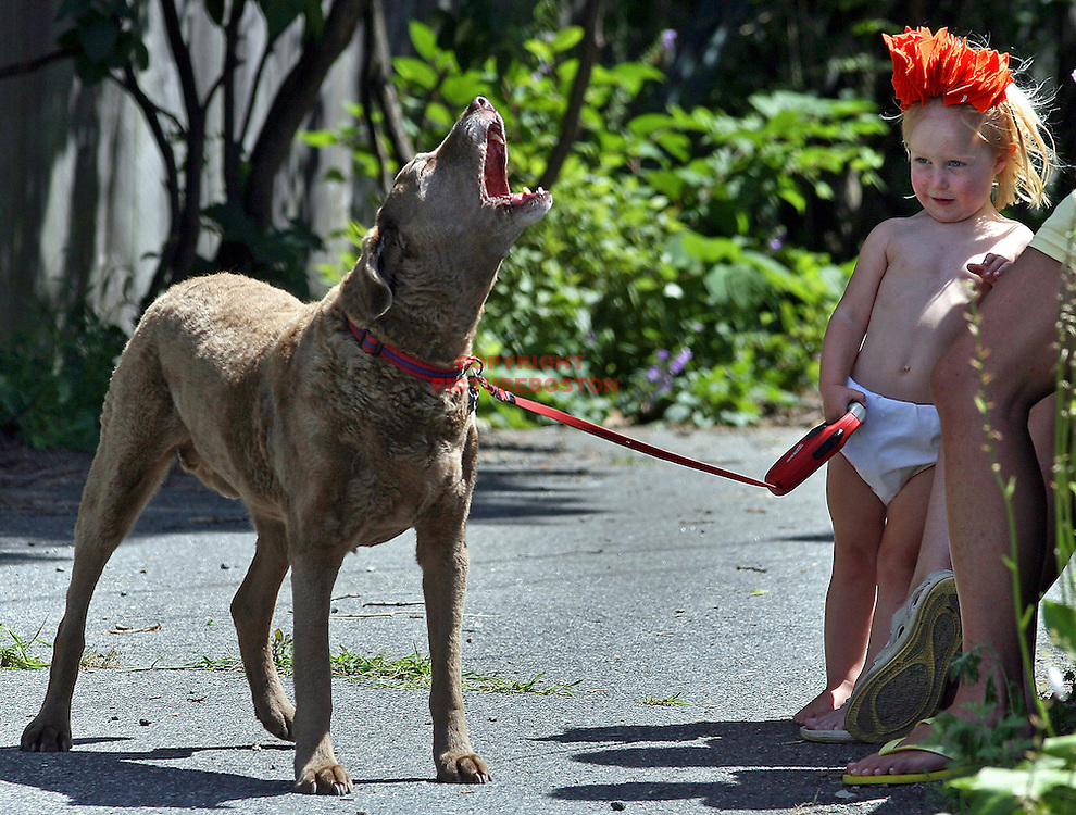 Rachel Ledwith, age 3 years, walks her friend's dog, Belvedere, age 12 years.