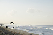 Morning at the Santa Monica Beach with a seagull flying and people enjoying the beach. Santa Monica, CA 10.27.14
