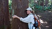 Hiking, Sugi Grove, Waimea Canyon, Kokee State Park, Kauai, Hawaii