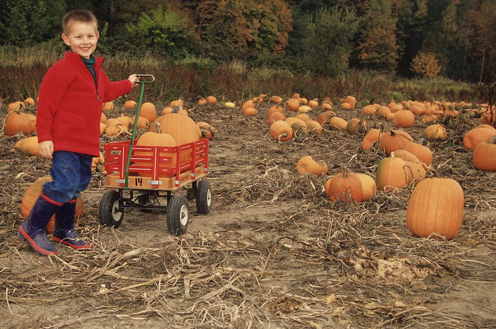 North America, USA, Washington, Snohomish. Boy with wagon in pumpkin patch  MR