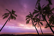 Sunset through palm trees at Pu'uhonua o Honaunau NHP(City of Refuge), Kona Coast, The Big Island, Hawaii USA