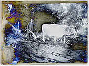 fading emulsion on glass plate photo with farmer and oxen