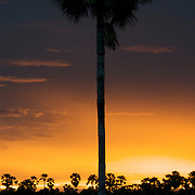 Sunset in Uthai Thani province Thailand with Borassus flabellifer Asian Palmyra Palm trees