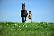 A mare and her foal on a spring Kentucky day.