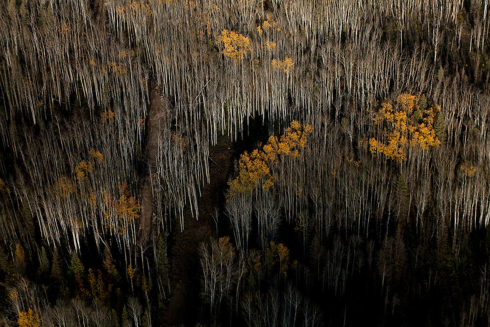 Dark dense forest in Canada. <br /> Photographed by editorial photographer Nathan Lindstrom
