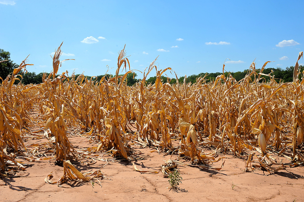 high heat and drought causing loss of crops all across Oklahoma