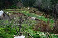Madeira farming