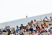 Bird on the top to the Suzanne lenglen field during the Roland Garros French Tennis Open 2018, day 2, on May 28, 2018, at the Roland Garros Stadium in Paris, France - Photo Pierre Charlier / ProSportsImages / DPPI