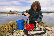 Giant Titicaca Frog and Esther Perez (Researcher)<br />