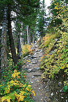 The trail around Jenny Lake in Grand Teton National Park winds through the forest