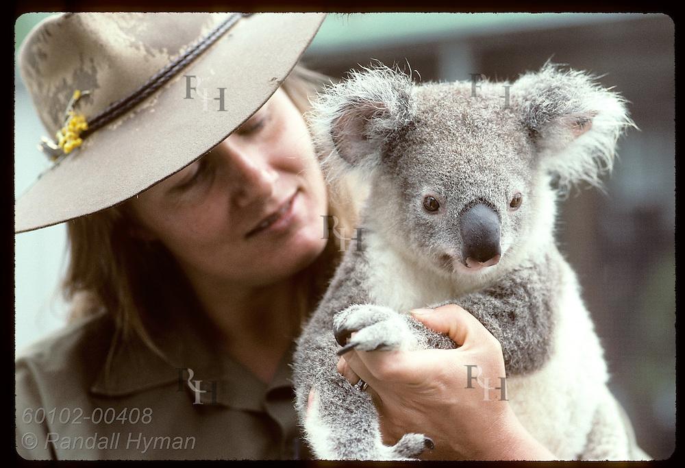 Year-old koala gazes about while held by vet nurse Lynne Douglas at Univ of Queensland; Brisbane. Australia