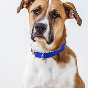 20120326 XL Dogs/Karen