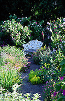 cast iron white two seat bench in a rose garden with foxgloves