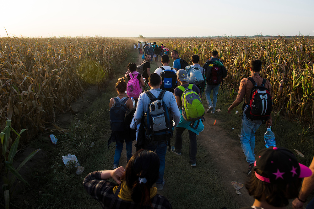 Migrants walk through cornfields west of Sid, Serbia towards the Croatian town of Tovarnik on September 17, 2015. After being bussed to the border, migrants were directed by aid workers and police on a route that circumvented the official checkpoints of both nations.