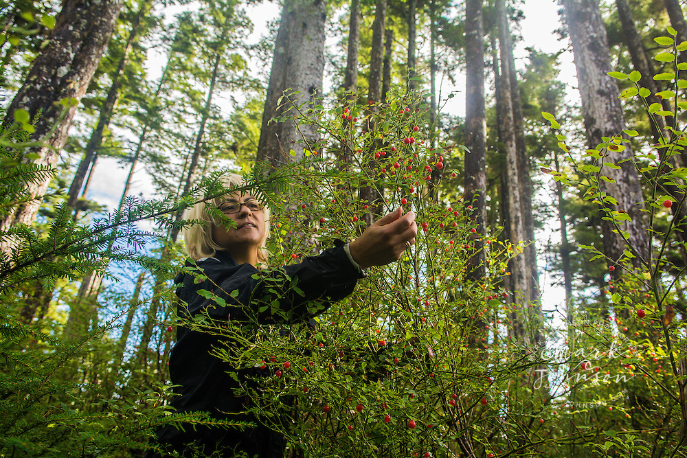 Woman picking huckle berries in the forest, Sitka, Alaska