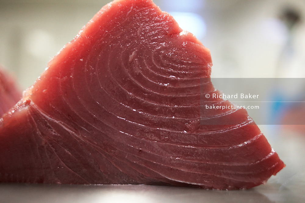 A chunk of prime yellow fin tuna fish steak lies after filleting on a table in a processing factory on the island of Himmafushi, Maldives. The 50kg carcasses have been swimming across the Indian Ocean non-stop since birth and having just been line-caught by freelance boat crews who share profits for only high-quality fish that passes stringent health tests. The tuna has been encased in ice since being landed at sea to keep a low-temperature body core so the workers cut out the prime flesh as quickly as possible before boxing the resulting chunks of steak for export by air to Europe and in particular for customers such as UK's Sainsbury's supermarket. The Sri Lankan butchers are ex-fishermen and widowers, having lost their families during the Tsunami. Using extremely sharp knives, they skillfully remove valuable meat and throw away the rest.