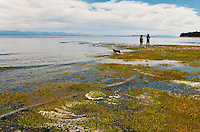 The sea grass soaks up the saltwater as the tide rises at Miracle Beach, near Campbell River, BC