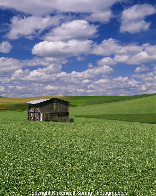 AA07310-04...WASHINGTON - Old shed in a farm field in the fertile Palouse area of Eastern Washington.