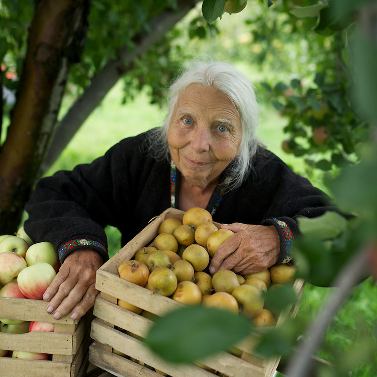 Genevieve Weston in the Weston Antique Apples orchard near New Berllin, Wisconsin.<br />