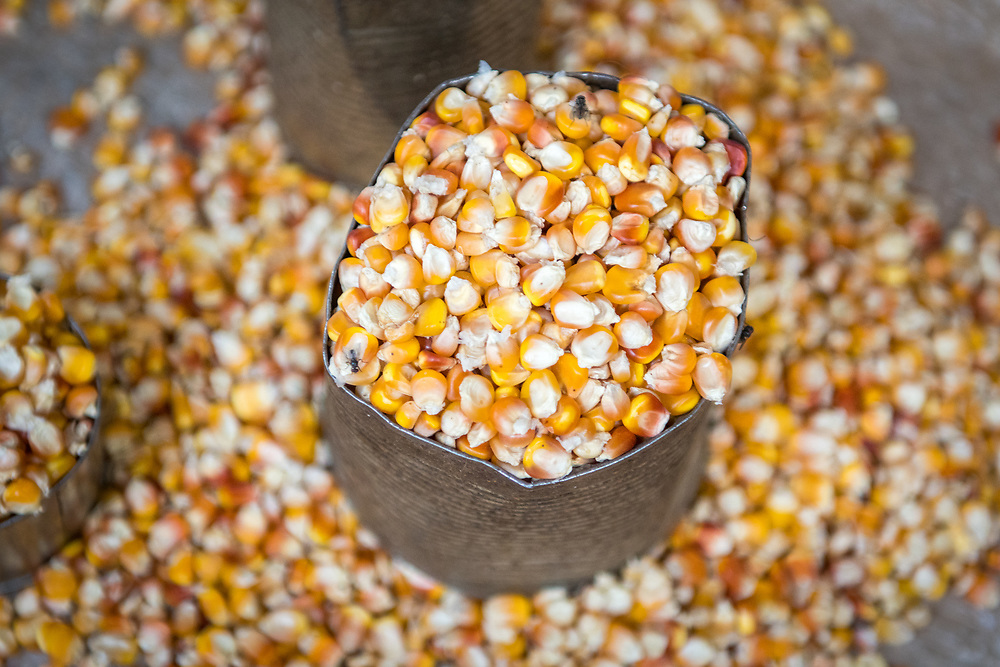 Corn Kernels fill a can in Ganta, Liberia