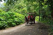 Horse cart tour, Waipio Valley, Hamakua Coast, Island of Hawaii