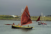 Roundstone Regatta - traditional Irish fishing boats preparing to Race, July 2004